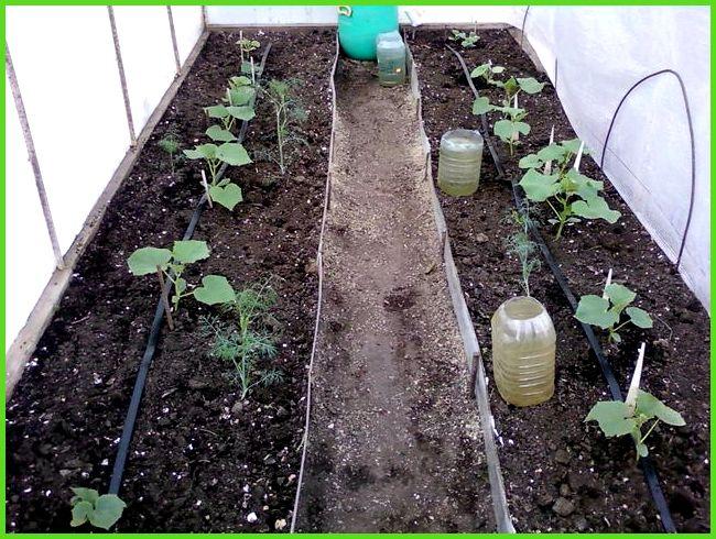 полу)автоматический полив растений в теплице страница 2
